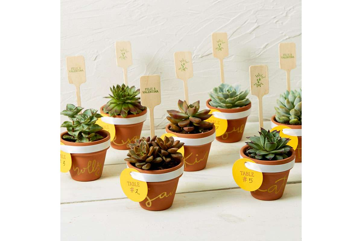 diy mini succulent pot as a place card