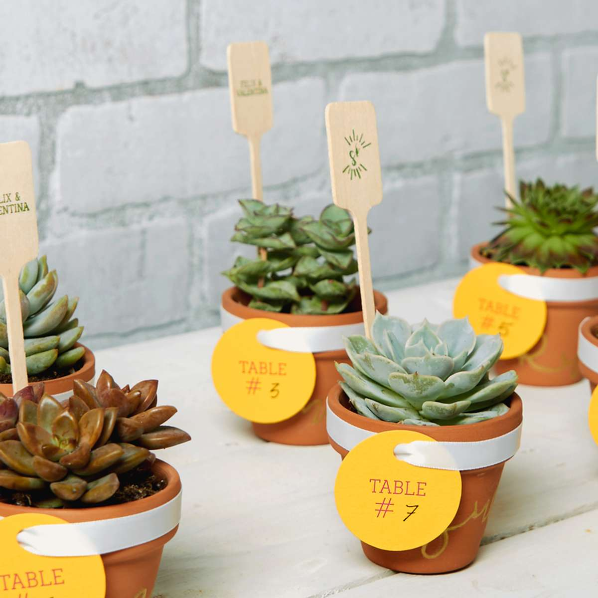 simple to make mini succulents as place cards
