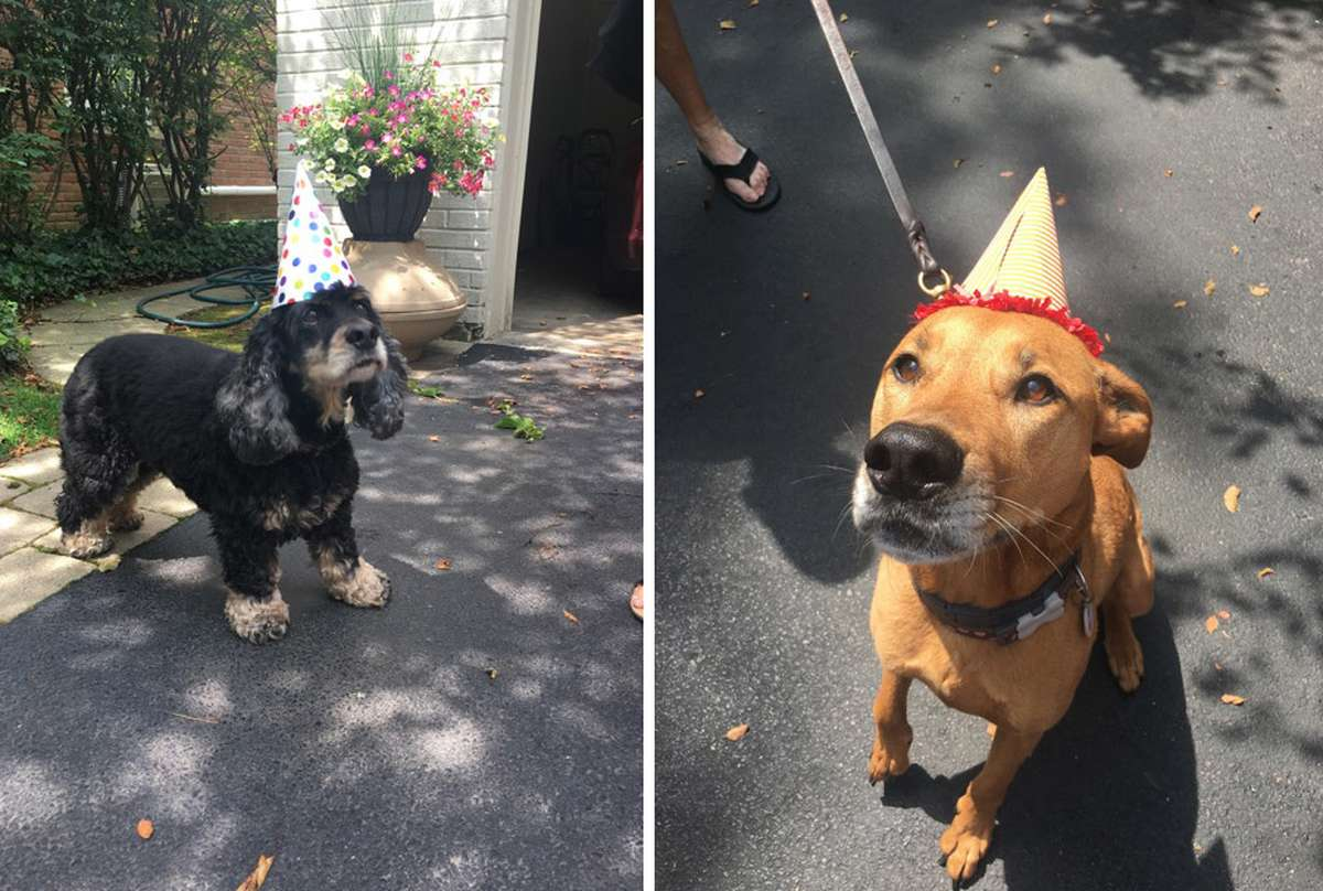 how to throw a dog birthday party